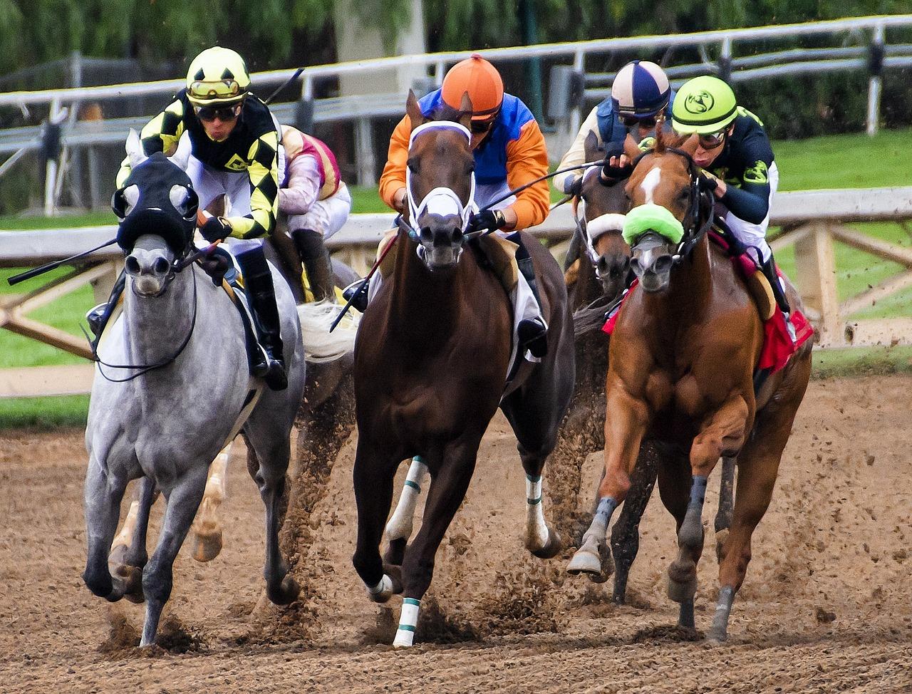 Course de chevaux dans hippodrome