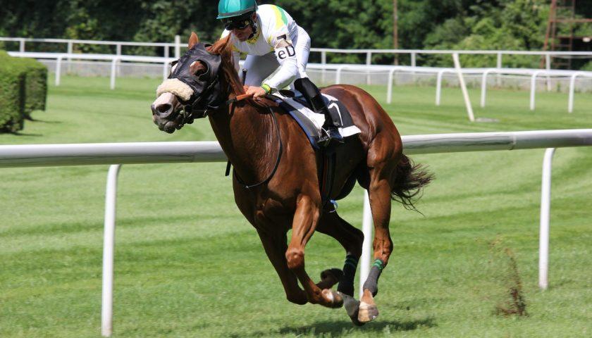 Jockey sur son cheval